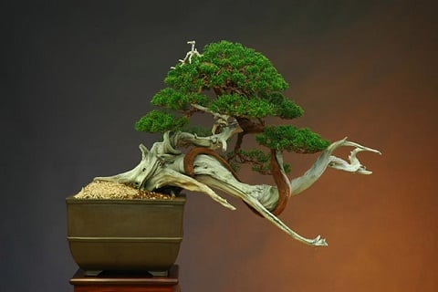 Miniature Wire Bonsai Trees by means of Ken To - Bonsai Tree Art
