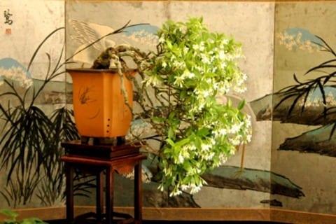 Displaying Bonsai