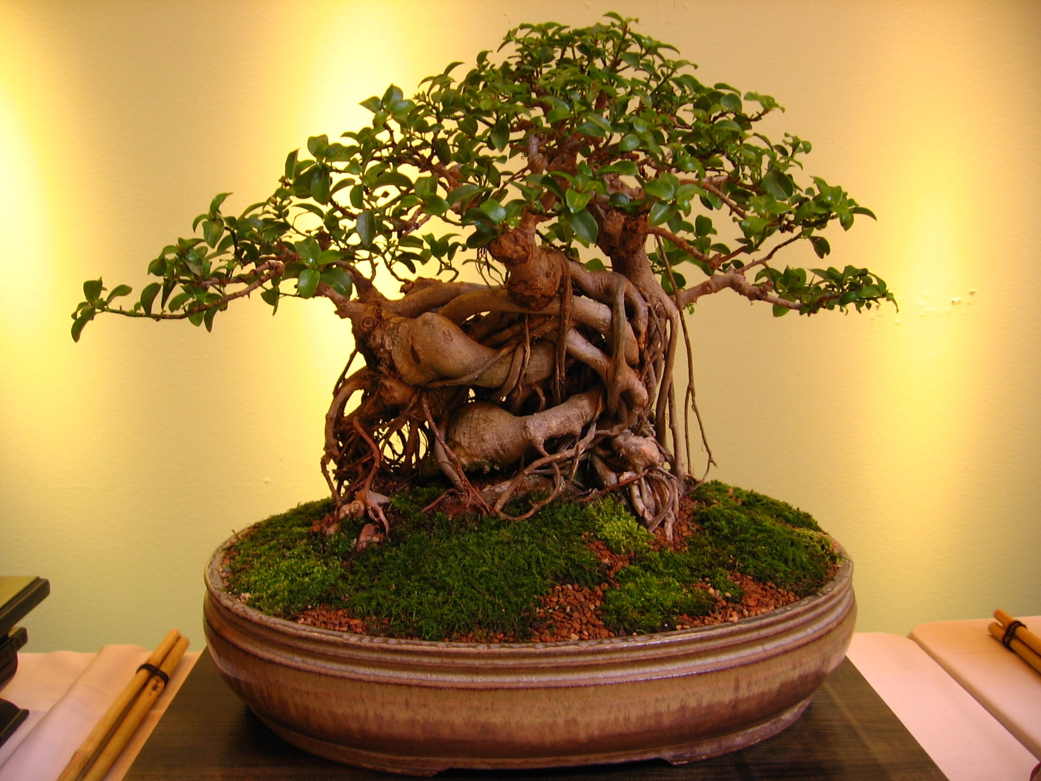 Things To Avoid When Growing Bonsai Trees