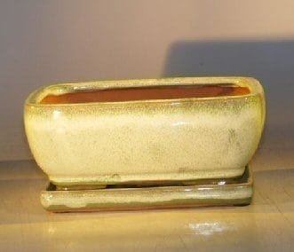 Woodlawn Green Ceramic Bonsai Pot - Rectangle Professional Series with Attached Humidity/Drip tray 8.5 x 6.5 x 3.5