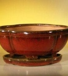 Parisian Red Ceramic Bonsai Pot - Oval Professional Series with Attached Humidity/Drip tray 8.5 x 6.5 x 3.5