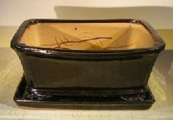 Black Ceramic Bonsai Pot- Rectangle Professional Series with Attached Humidity/Drip Tray 10.0 x 9.0 x 4.5