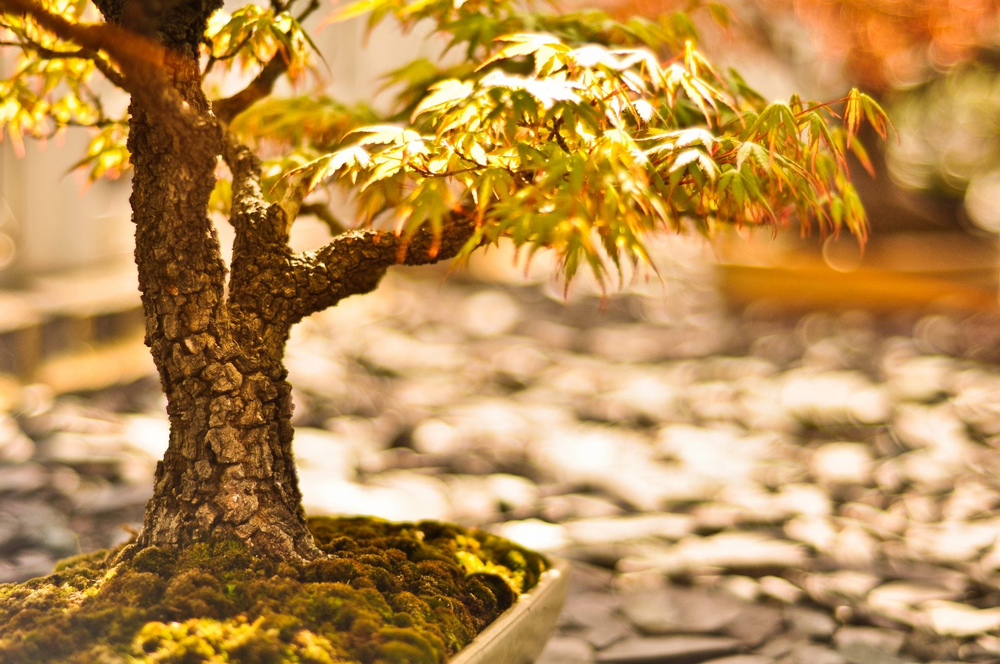 Art of Bonsai Trees