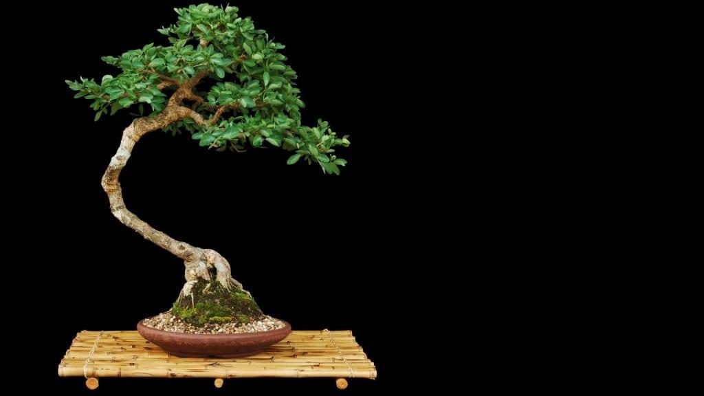 Artificial Bonsai Trees