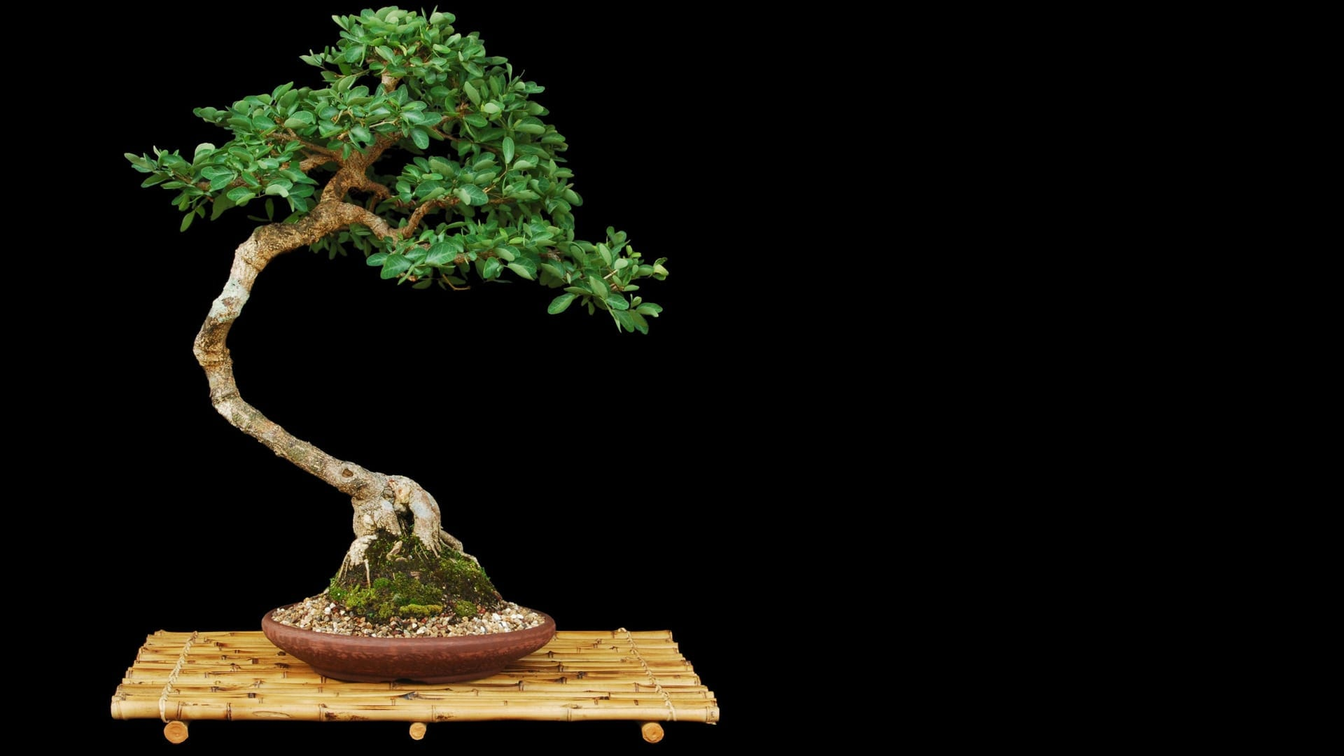 artificial bonsai trees bonsai tree