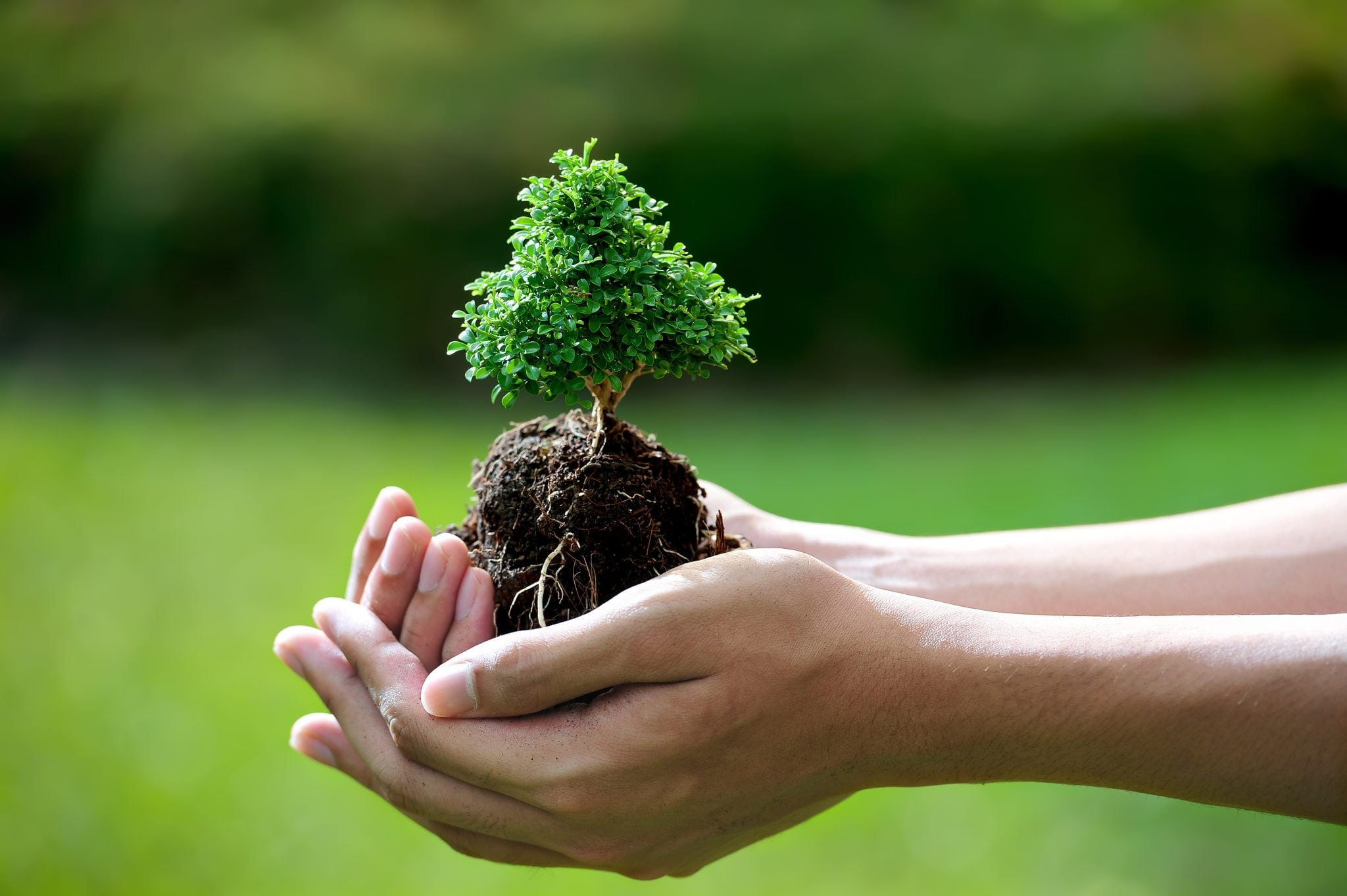 How To Care Your Bonsai To Make It Live For Hundreds Of Years Bonsai Tree Gardener