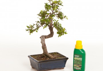 Bonsai Tree Feeding & Fertilizers