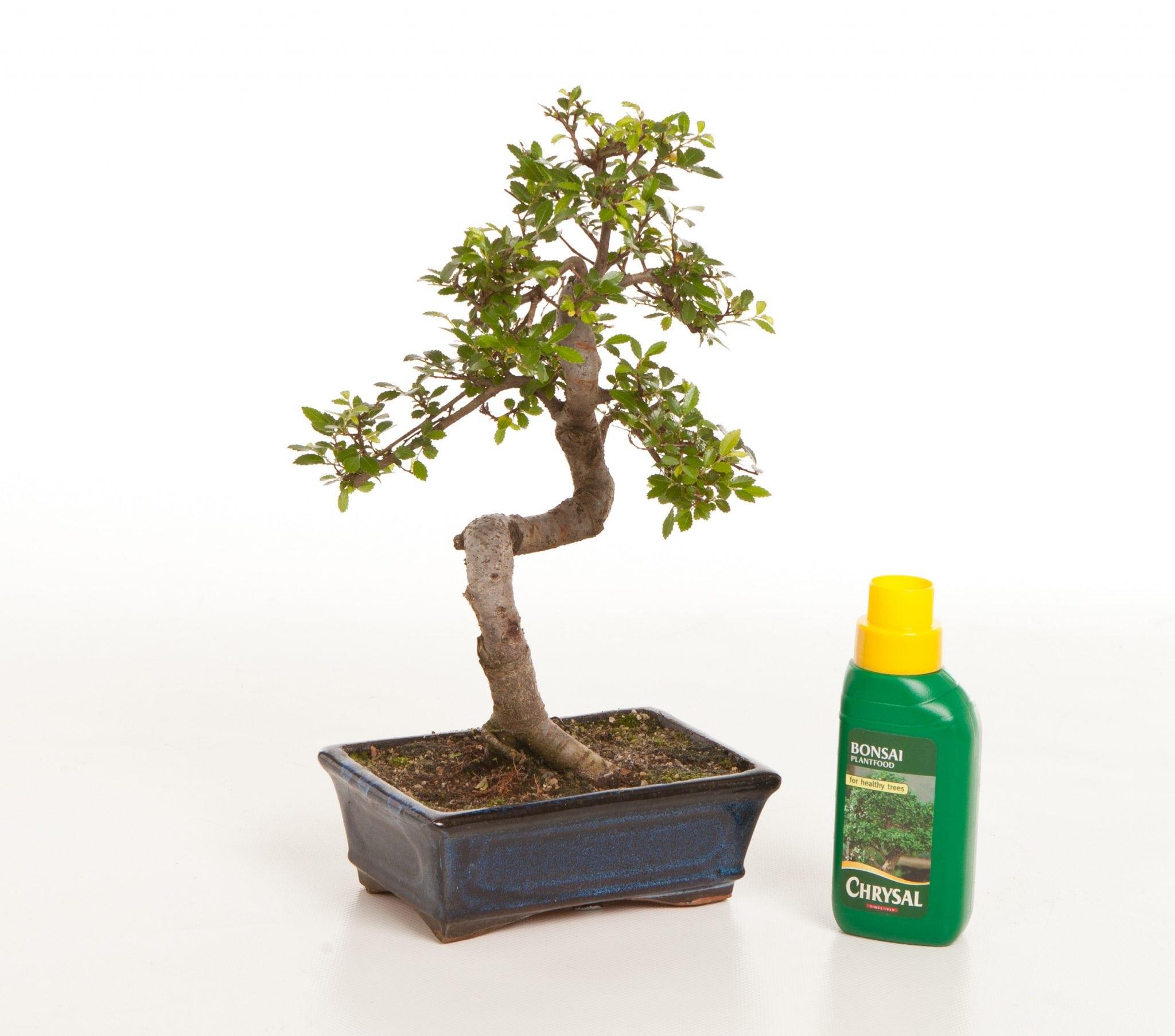 Bonsai Tree Feeding & Fertilizers