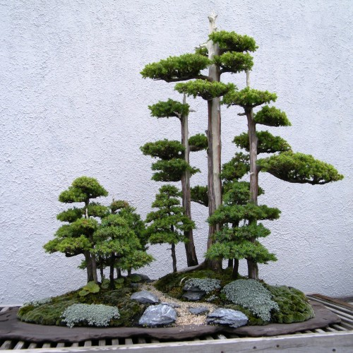 How To Bonsai Tree