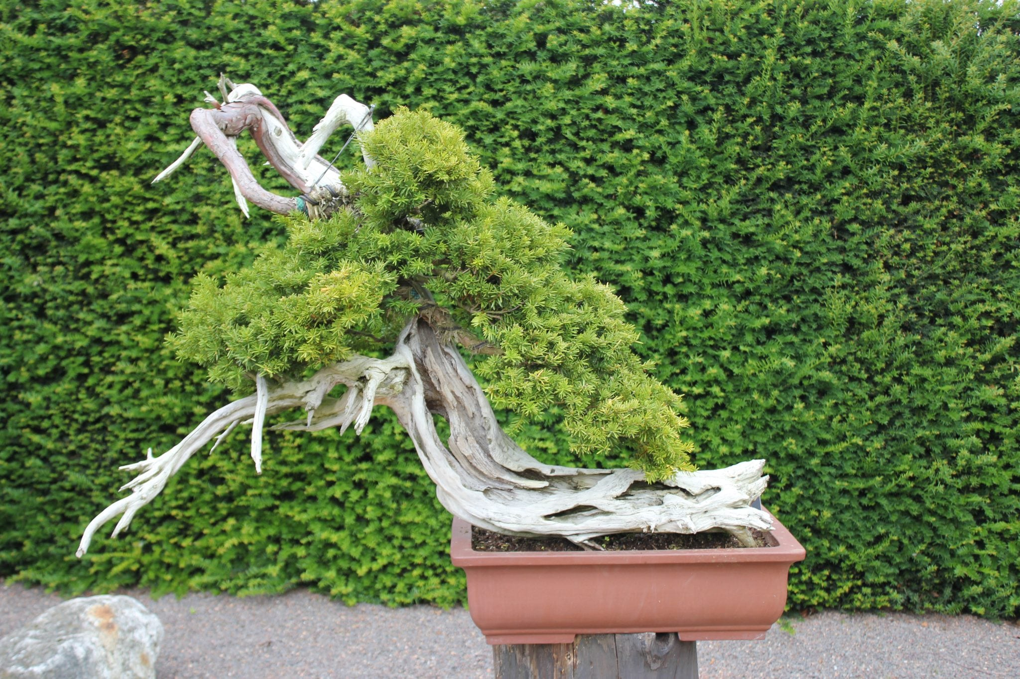 Bonsai Tree Shaping