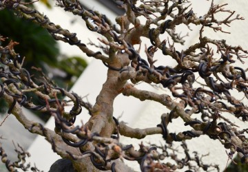 Bonsai Tree Wiring