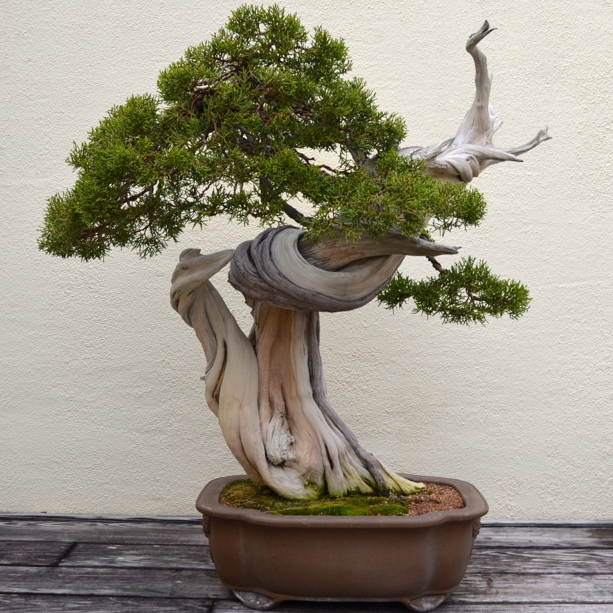 What Are Deadwood Bonsai Techniques Bonsai Tree Gardener
