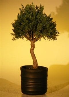 Artificial Japanese Cedar Bonsai Tree For Sale #2
