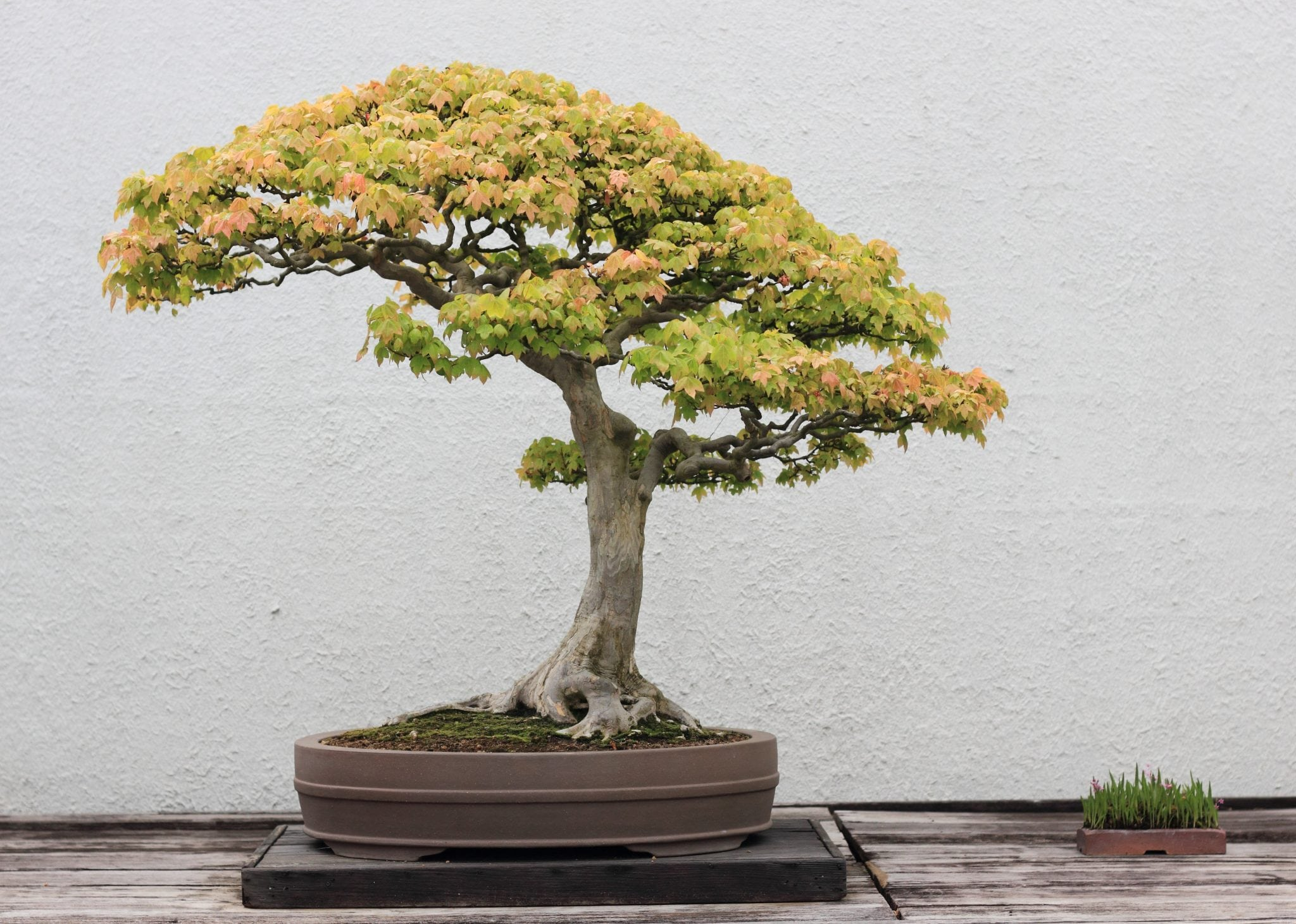 bonsai tree store finding the best trees bonsai tree