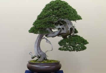 How To Identify A Bonsai Tree