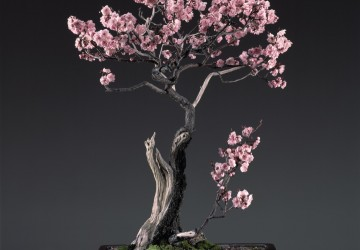 Indoor & Outdoor Bonsai Trees