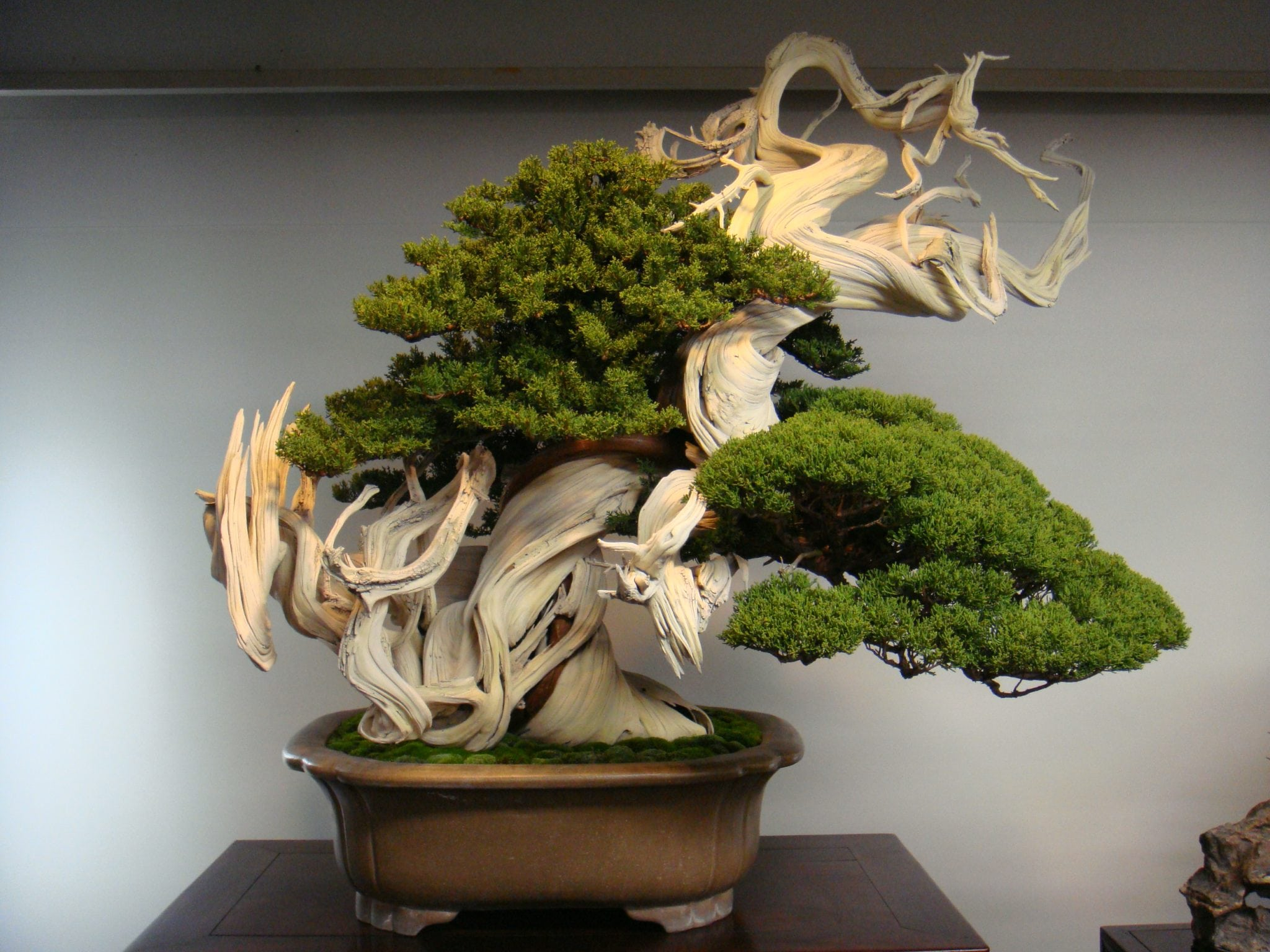 Most Beautiful Bonsai Tree