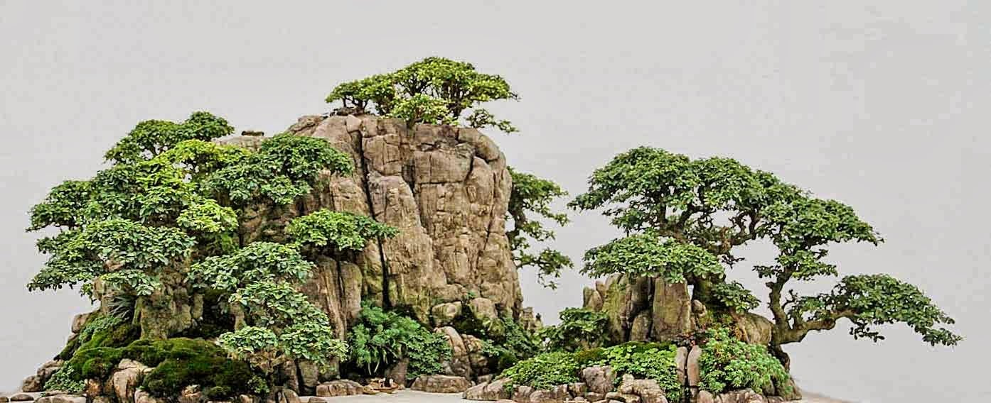 How To Landscape With Bonsai Trees Bonsai Tree Gardener