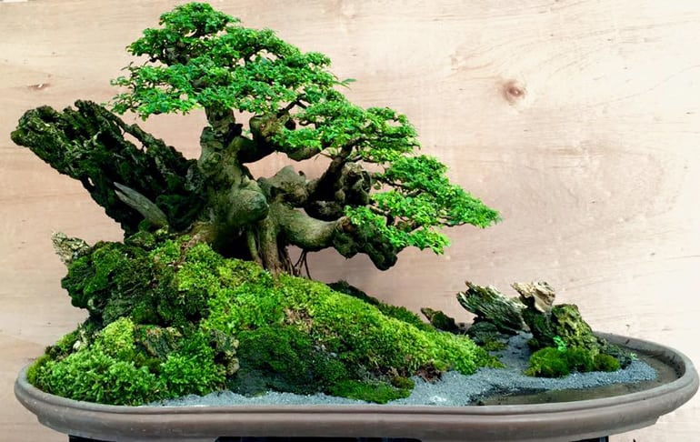 Bonsai Landscape