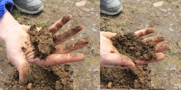 Bonsai Soil Clump Test