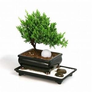 Bonsai Soil Drainage