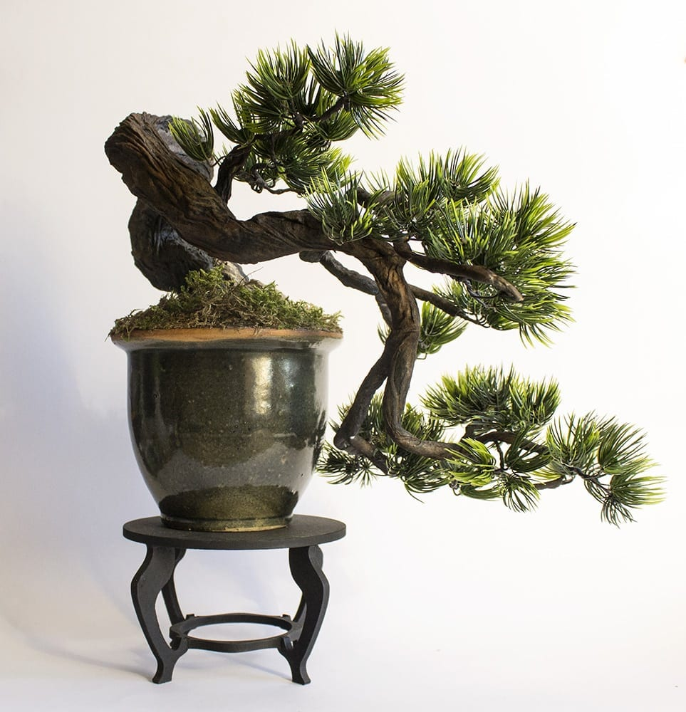 Image result for Cascade bonsai