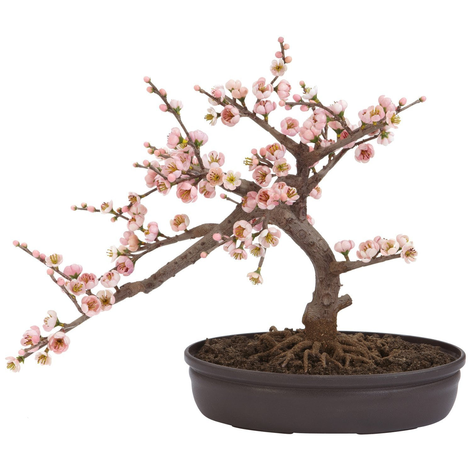 Cherry Blossom Bonsai Trees Bonsai Tree Gardener