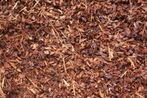 Decomposing Plant Matter Bonsai Soil
