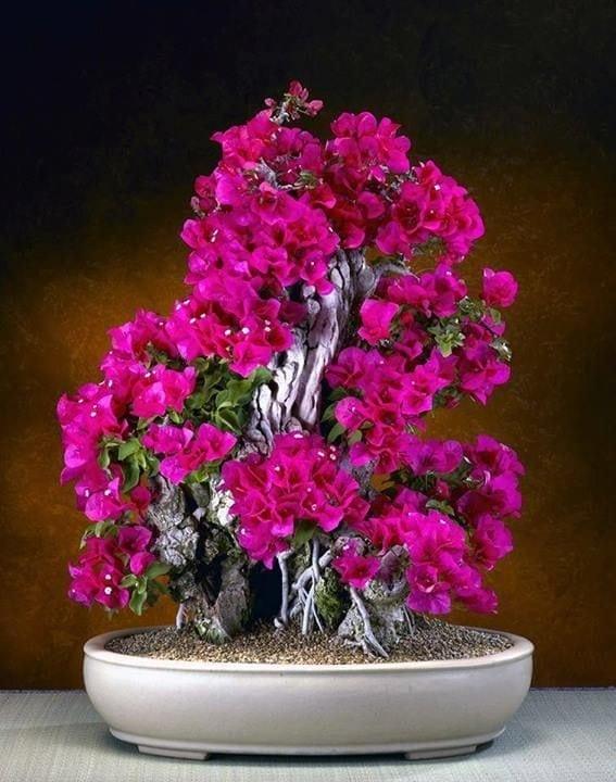 Flowering Bonsai Tree