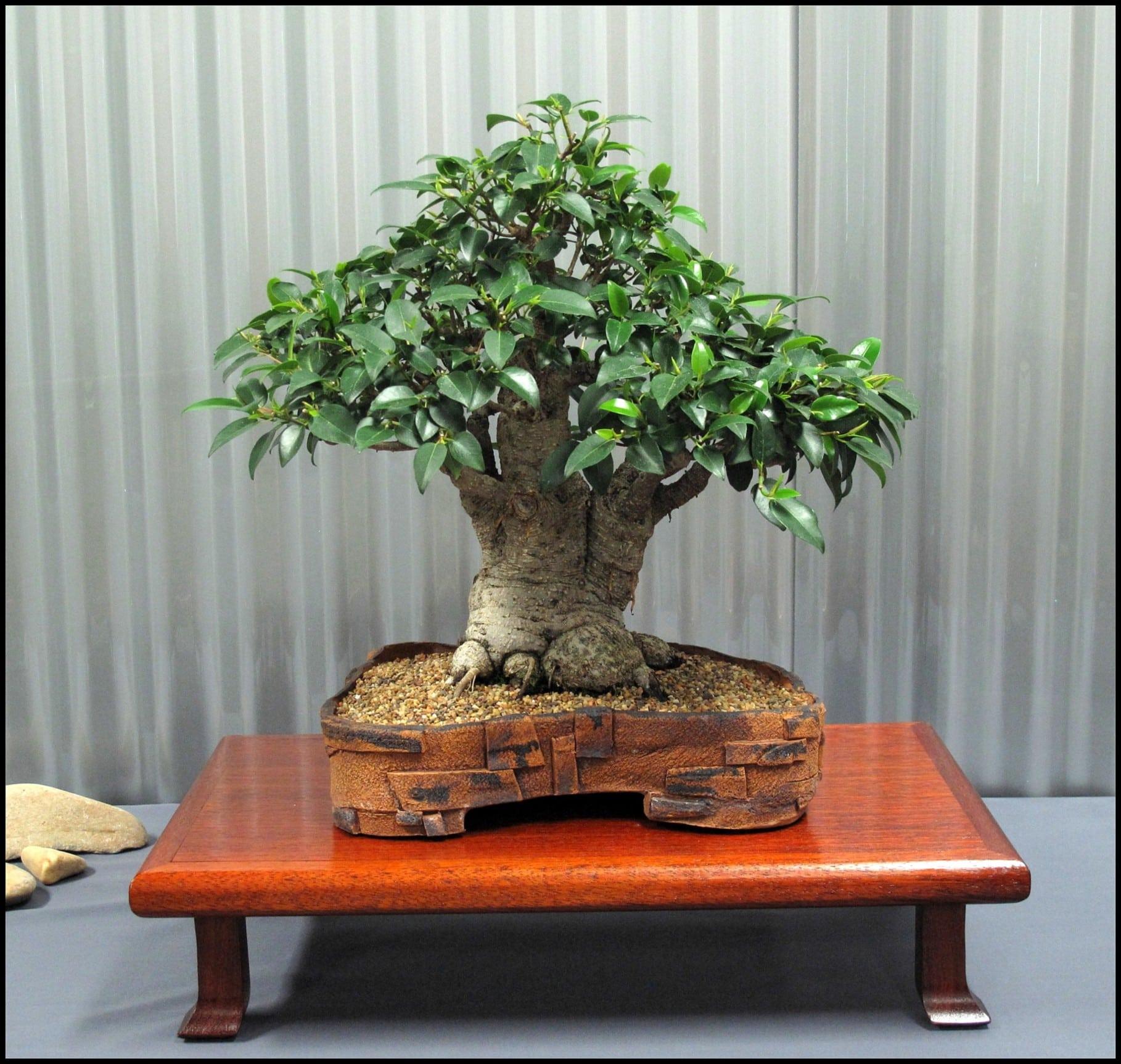 How to learn bonsai