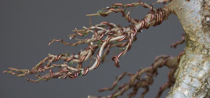 How To Shape A Bonsai Tree