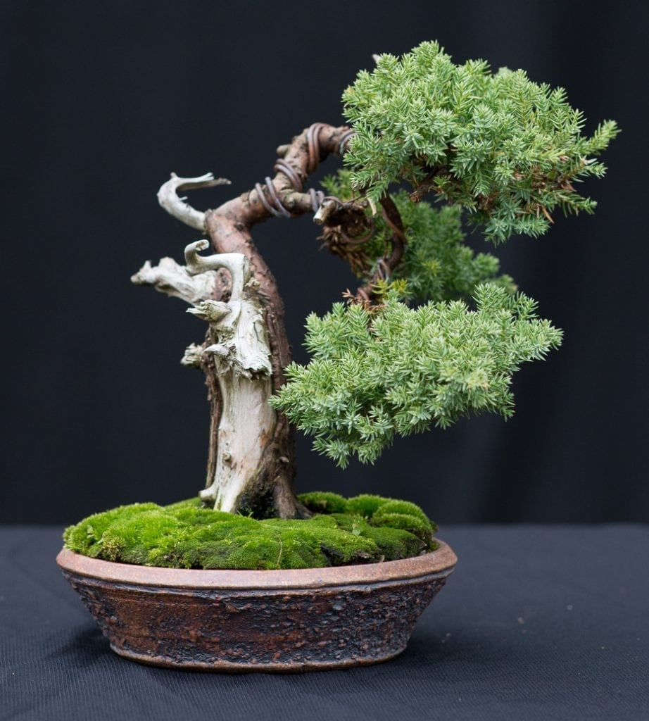 Wondrous Wiring Bonsai Trees Instructions Online Wiring Diagram Wiring 101 Mecadwellnesstrialsorg