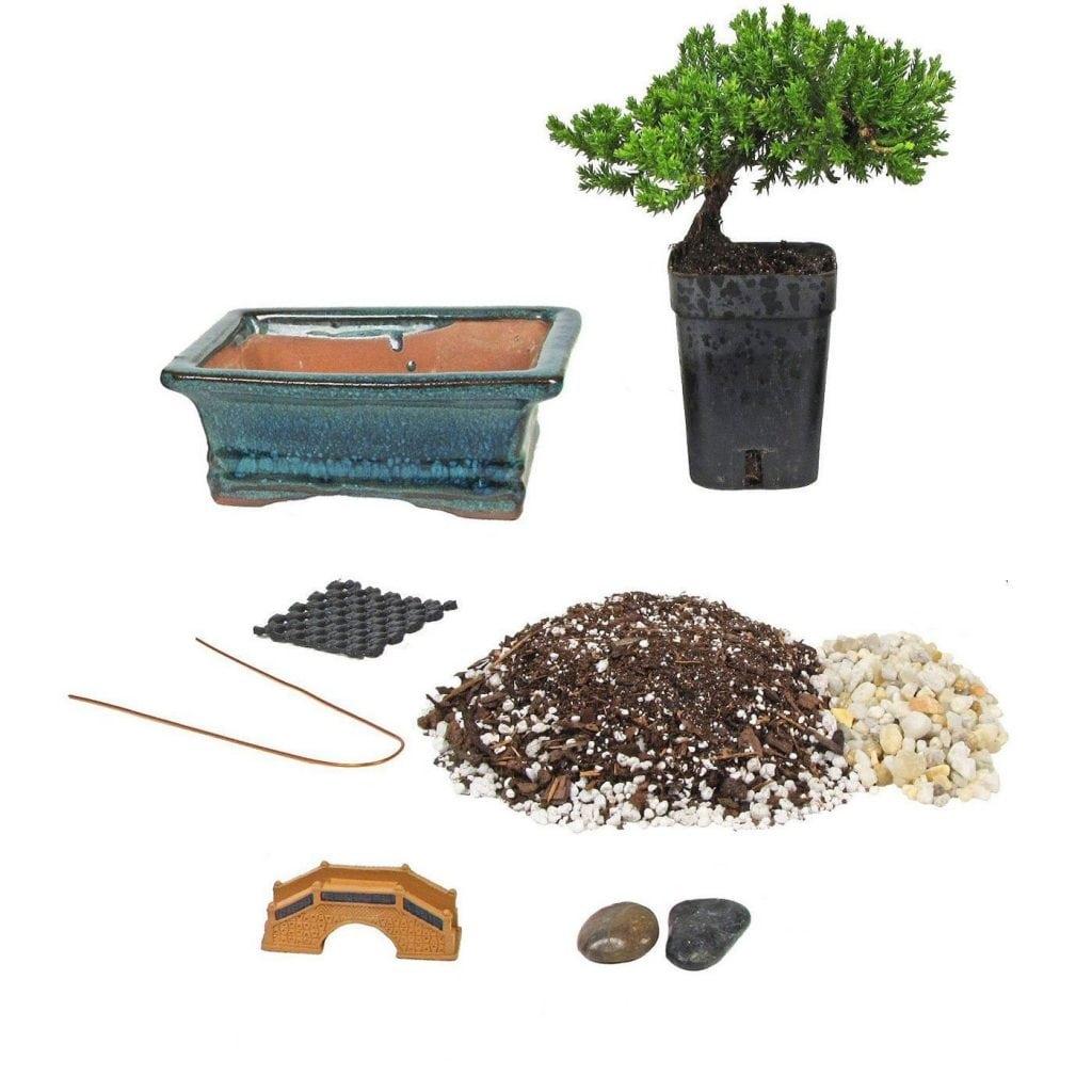 JM Bamboo Bonsai Tree Starter Kit