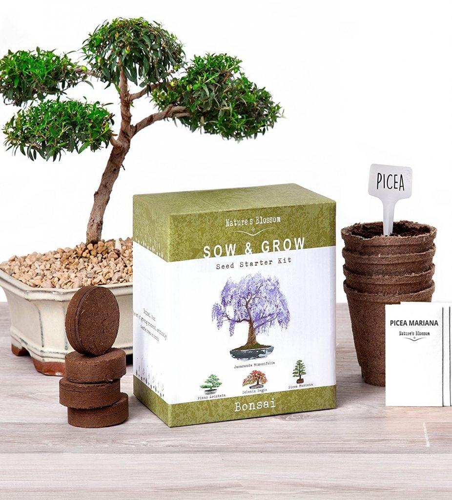 Nature's Blossom Bonsai Garden Seed Starter Kit