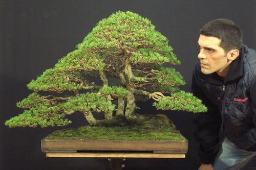 Pinus Silvestris - Stefano Frisoni