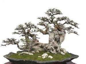 Raft bonsai style (ikadabuki)