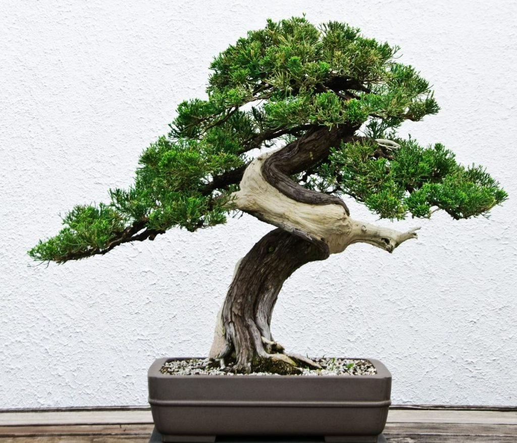 harmony of different bonsai design elements