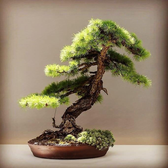How To Choose The Best Starter Kits For Beginners Bonsai Tree Gardener