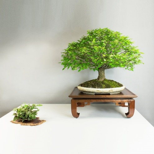 How To Display Your Bonsai Using Stands Bonsai Tree Gardener