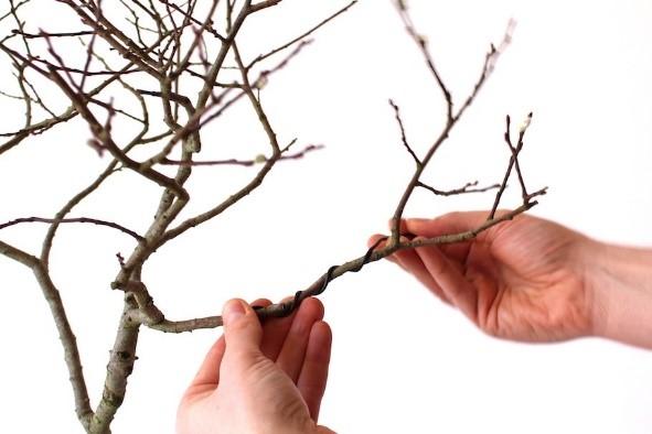 How To Use Aluminum Bonsai Wire Bonsai Tree Gardener