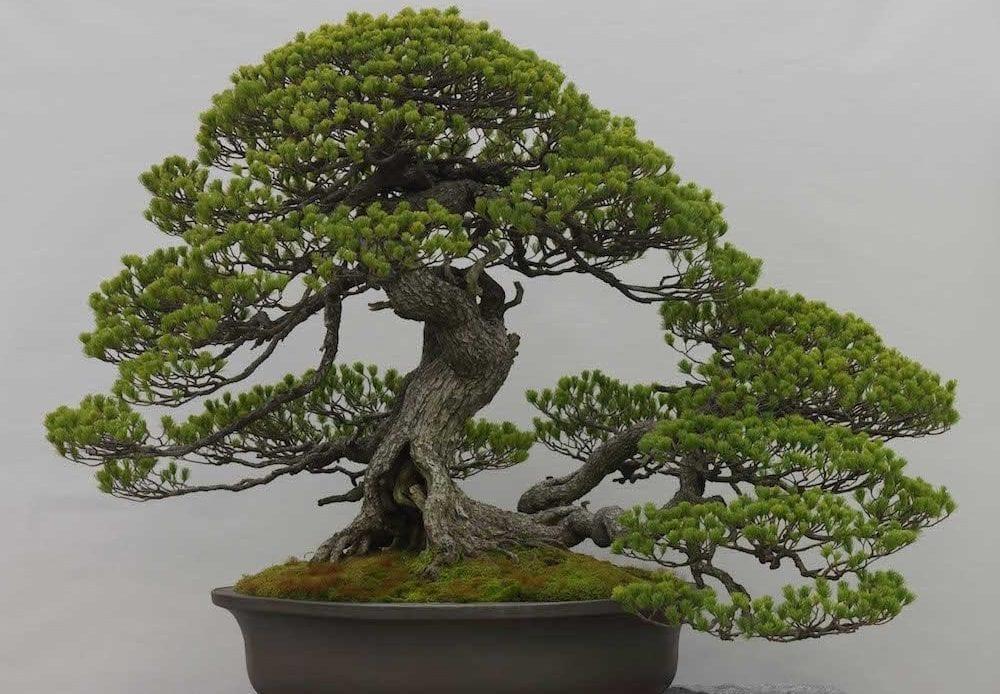 Strange Tools You Need To Bend Bonsai Branches Bonsai Tree Gardener Wiring Database Gramgelartorg