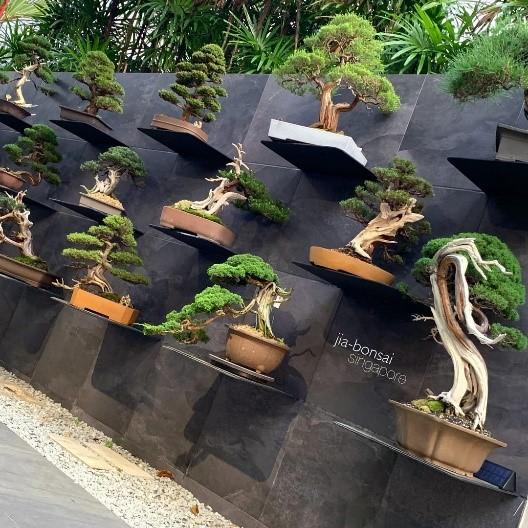 Why Are Bonsai Trees So Expensive Bonsai Tree Gardener