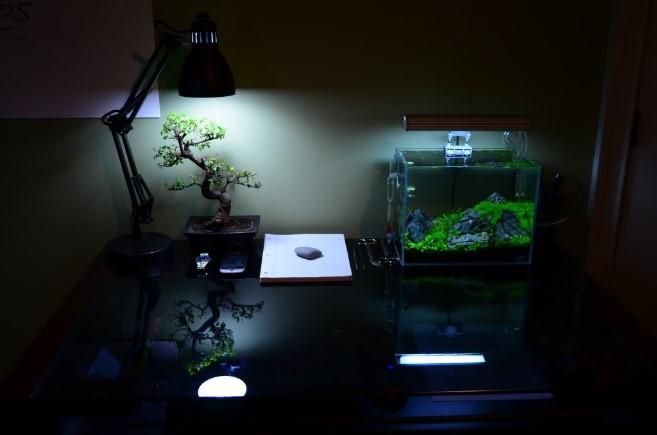 Artificial Light To Grow Bonsai Trees