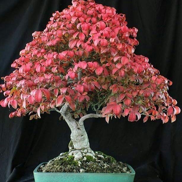 Best Bonsai Tree Repotting Kits Bonsai Tree Gardener