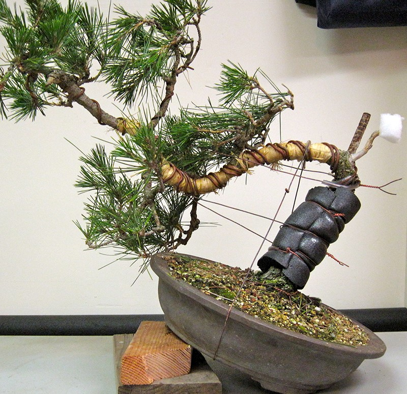 how to make bonsai tree