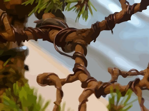 How To Use Copper Bonsai Wire Bonsai Tree Gardener