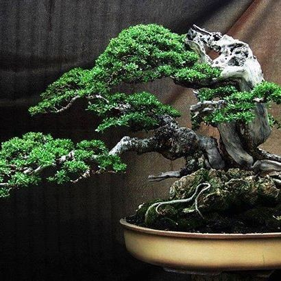 How to Use Copper Bonsai Wire | Bonsai Tree Gardener Bonsai Wiring on